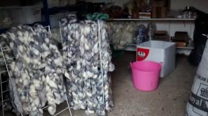 woolroom (1)